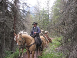 A trail repair mule pack train in Glacier National Park